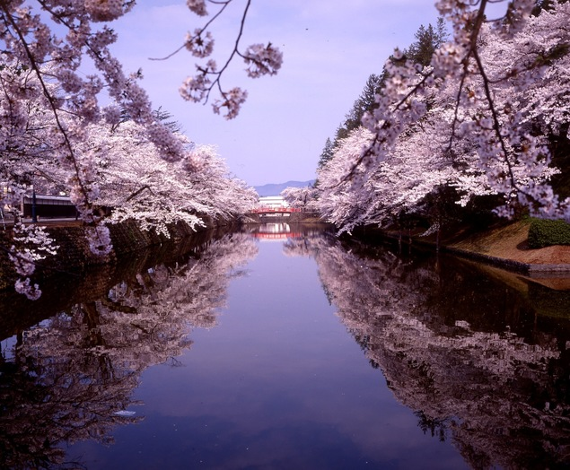 米沢市 松が岬公園 上杉神社 桜