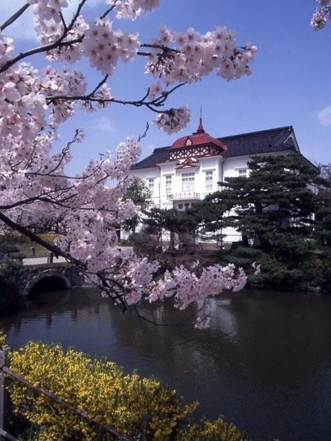 鶴岡市 鶴岡公園 桜