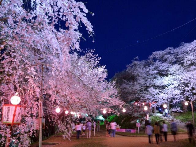 南陽市 烏帽子山公園 桜