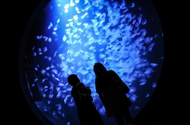加茂水族館 クラゲ