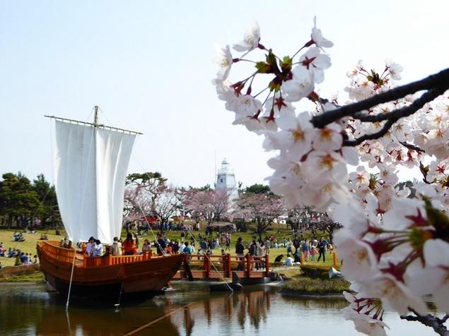 酒田市 日和山公園 桜