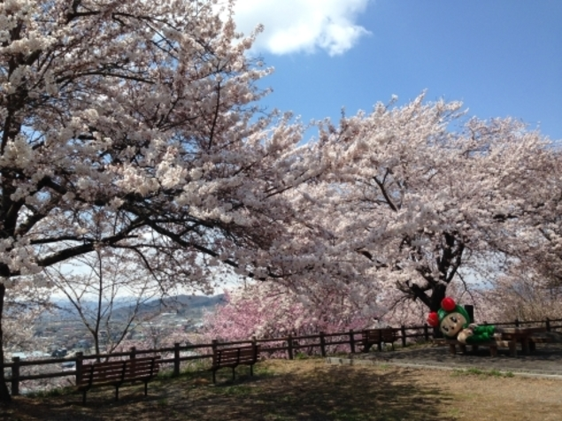 寒河江市 寒河江公園 桜