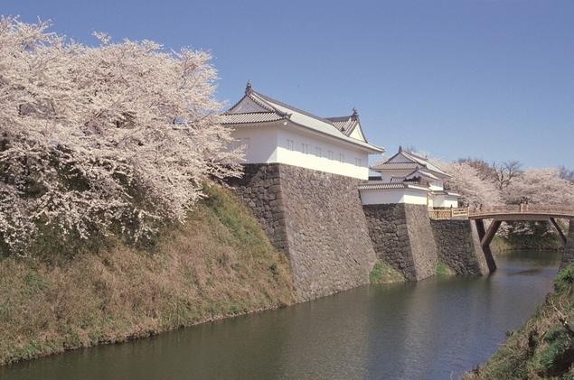 山形市 霞城公園 桜