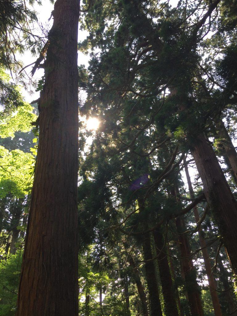 羽黒山 杉並木