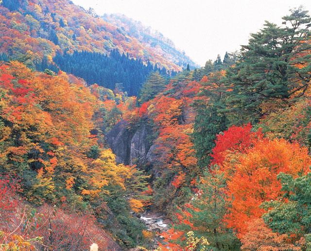 面白山紅葉川渓谷 紅葉