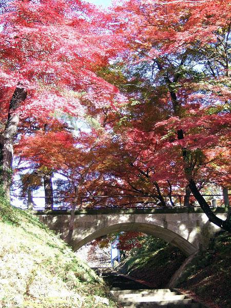赤湯烏帽子山公園 紅葉