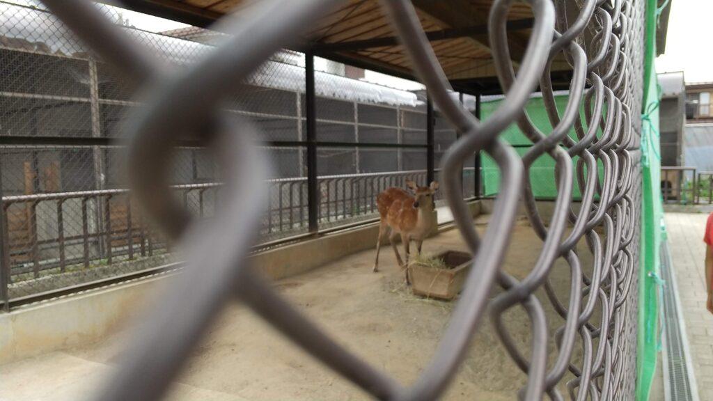 河北町児童動物園 シカ