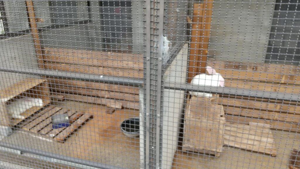 河北町児童動物園 ウサギ