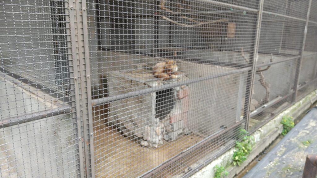 河北町児童動物園 キツネ
