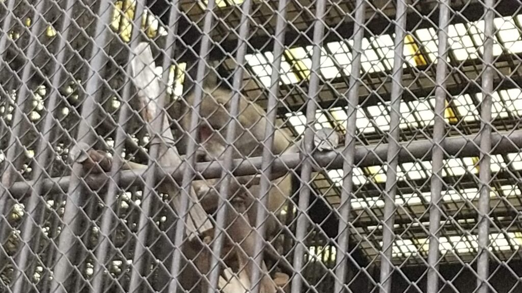河北町児童動物園 サル